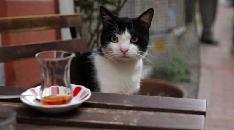 """İçleri Isıtan Bir Belgesel Film """"Kedi"""""""