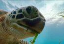 Dünya Çevre Günü'ne özel 5 belgesel önerisi